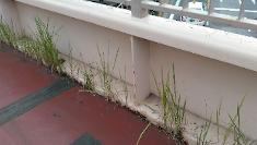 歩道橋の雑草